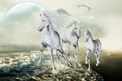 White Horses On The Beach. White horses galloping with pleasure on the beach in the freedom. A fantastic horse picture for all horse lovers Stock Image