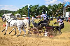 White horses and carriage on finish line at the horse track. Horse contest with carriage on sunny day. This is a regional contest in Covasna County, starting Stock Photos