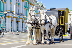 White horses with carriage Stock Photos