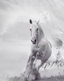 White horses in dust Royalty Free Stock Image