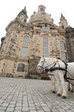 White horses in front of Frauenkirche, Dresden, G. Pair of white horses in front of Church of Our Lady (Frauenkirche) in Dresden, Germany Stock Photography