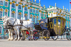 White horses with royal carriage on Palace square in Saint Peter Royalty Free Stock Photo