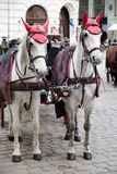 White horses Vienna Royalty Free Stock Images