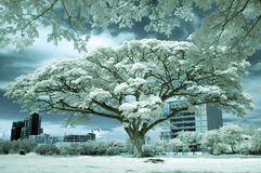 White Hot. An IR image taken during high noon in Cebu City, Philippines Royalty Free Stock Photo