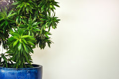 White hotel lobby with green plant Stock Image