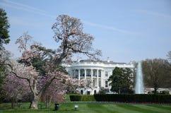 White house. Beautiful day of white house Stock Photos