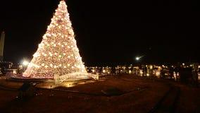 White House Christmas Tree stock video