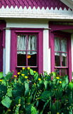 White House, Purple Window Frame and Flowering Cactus Stock Images