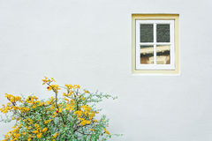 White house wall, window, yellow green plant Royalty Free Stock Photos