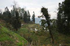 White hut in the rice terraces stock images