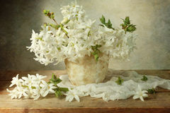 White hyacinth Royalty Free Stock Photos