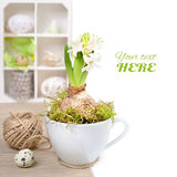 White hyacinth in a cup and Easter decorations in a shadowcase Stock Images