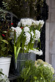White hyacinth flowers Royalty Free Stock Images