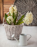 White hyacinths in a and watering can on a window sill. White hyacinths in a white basket and white watering can on a window sill stock photography