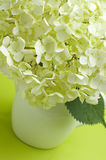 White hydrangea. Flowers of white hydrangea in a vase on a green background Royalty Free Stock Photos