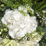 White hydrangea arrangement Royalty Free Stock Photography
