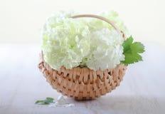 White hydrangea flowers Royalty Free Stock Photo