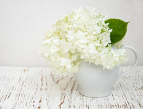 White hydrangea in a vase Stock Images