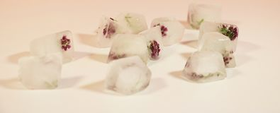 Ice cubes frozen flowers in the glass stock photo
