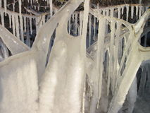White ice icicles on branches Stock Photography