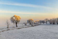 White icy trees in snow covered landscape Stock Photography