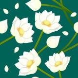 White Indian lotus on Indigo Green Teal Background. Stock Photo