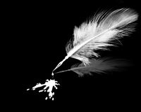 White ink and feather. White ink blot and feather on black background Royalty Free Stock Photography