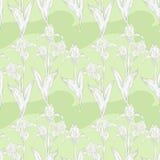 White iris Royalty Free Stock Image