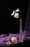 White iris Stock Image