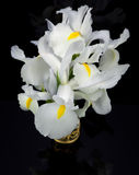 White Irises Stock Images