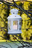 White iron lantern hanging on hawthorn branch. Garden party Stock Image
