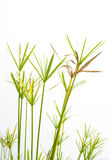 White Isolate Green and yellow grass Stock Photography