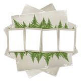 White isolated background. With paper frame and bunch of twigs fern Stock Images