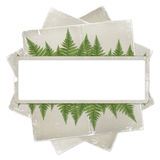 White isolated background with paper frame. And bunch of twigs fern Royalty Free Stock Images