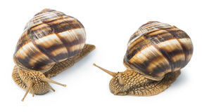 White isolated snail Royalty Free Stock Photography