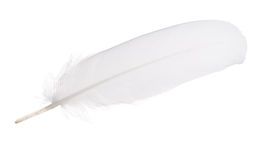 White isolated straight feather Stock Image