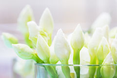 White jasmine flower buds in clear glass. Close up of white jasmine flower buds in clear glass with soft white backlit, selevtive focus on the front flowers Stock Images