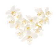 White jasmine flower heart Stock Photography