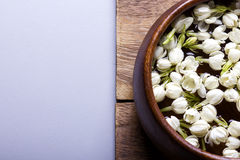 White jasmine flower Royalty Free Stock Image