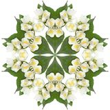 White jasmine flowers. In the form of a picture of a kaleidoscope stock image
