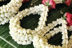 White jasmine garland Stock Photography