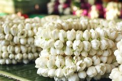 White jasmine garland Royalty Free Stock Images