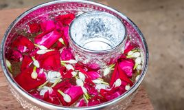 Jasmine and pink rose in the water bowl for express our respect to parents and grandparents on Songkran festival. White jasmine and pink rose in the water bowl royalty free stock images