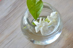 White Jasmine on water in glass bottle Stock Photos