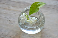 White Jasmine on water in glass bottle Stock Image