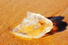 White jellyfish in sand macro Royalty Free Stock Images