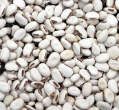 White kidney bean Royalty Free Stock Image