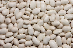 White kidney beans. Background of white kidney beans Royalty Free Stock Photo
