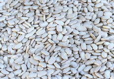 White kidney beans Stock Images