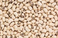 White kidney beans black eye closeup top view background. Royalty Free Stock Image